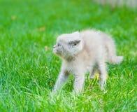 Устрашенный котенок младенца на зеленой траве Стоковое фото RF