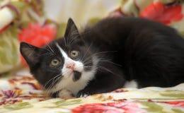 Устрашенный котенок Стоковое Фото