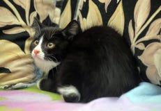 Устрашенный котенок Стоковые Фотографии RF