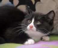 Устрашенный котенок Стоковые Фото