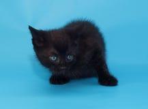Устрашенный черный пушистый котенок на сини Стоковые Изображения RF