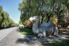 усыпальница статуи фарфора верблюда переулка ming стоковое изображение rf