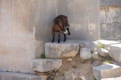 Усыпальница козы идя старая Стоковая Фотография