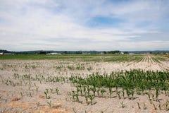 Условия засухи Стоковое Фото
