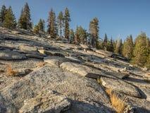 Утесистая гора с деревьями стоковые изображения
