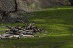 Утесистая земля Стоковая Фотография