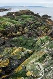 утесистый берег Стоковая Фотография