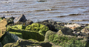 утесистый берег Стоковое фото RF