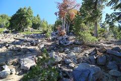 Утесистый горный склон Стоковое Изображение RF