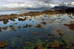 Утесистый Seashore Шотландии в лете Стоковое Фото