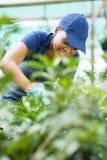 Утеска работника питомника стоковая фотография rf