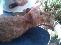 Утеска собаки стоковое изображение