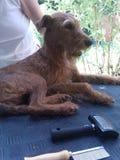 Утеска собаки стоковая фотография