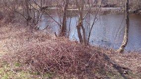 Утески весны Стоковая Фотография