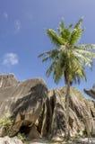 Утесы валунов и ладонь кокоса лист в острове Сейшельских островах Digue Ла Стоковое Изображение