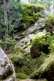 Утесы в лесе стоковые фото