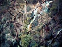 Утесы дерева стоковая фотография