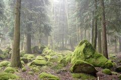 Утесы зеленого цвета леса стоковые изображения