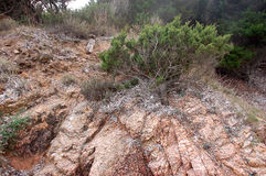 Утесы и ландшафт типичные Сардинии Стоковые Фото