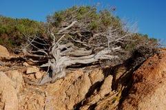 Утесы и ландшафт типичные Сардинии Стоковая Фотография RF