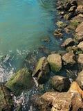 Утесы и водоросли моря в San Francisco Bay Стоковые Фотографии RF