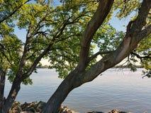 Утесы и дерево реки Стоковая Фотография RF