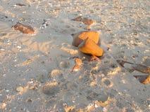 Утесы и камешки на пляже Стоковое Изображение