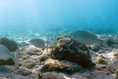 Утесы и камешки солнечных лучей подводные на рыбах плавания морского дна стоковые изображения rf