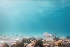 Утесы и камешки солнечных лучей подводные на рыбах плавания морского дна стоковая фотография