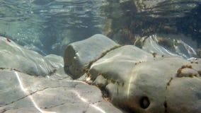 Утесы и морские водоросли увиденные от underwater видеоматериал