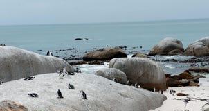 Утесы и пингвины Стоковые Изображения RF