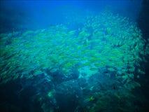 Утесы и рыба и пейзаж коралла в море развевают вода в тайском Стоковая Фотография