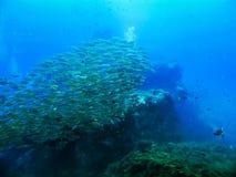 Утесы и рыба и пейзаж коралла в море развевают вода в тайском Стоковые Фотографии RF