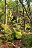 Утесы камней в лесе Стоковые Изображения RF
