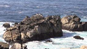Утесы Калифорнии прибрежные видеоматериал