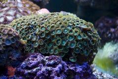 утесы коралла погрузили в воду Стоковые Изображения