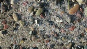 Утесы на пляже береговой линии Балтийского моря Wustrow и Ahrenshoop Германии сток-видео