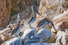утесы пеликанов Стоковое Фото