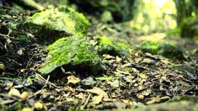 Утесы предусматриванные в мхе в лесе сток-видео