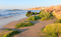 Утесы с мхом на пляже Стоковое фото RF