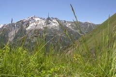 утесы травы Стоковое Изображение RF
