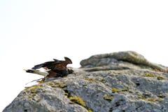 утесы хищника холма косточки Стоковая Фотография RF