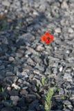утесы цветка растущие уединённые Стоковые Изображения RF