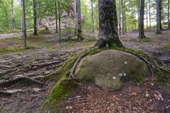 Утесы Dovbush, огромные камни, Стоковые Фото