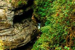 Утес в лесе осени около зеленых чащ стоковая фотография rf