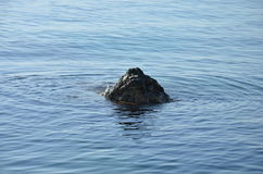 Утес в море Стоковые Изображения RF