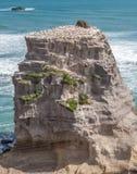 Утес в пляже Muriwai Стоковые Фотографии RF