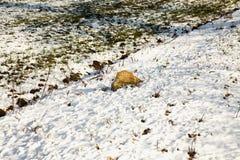Утес в снежке Стоковое Изображение RF