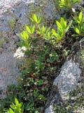 утес горы сада Стоковое фото RF