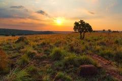Утес, дерево и Солнце Стоковое Фото
